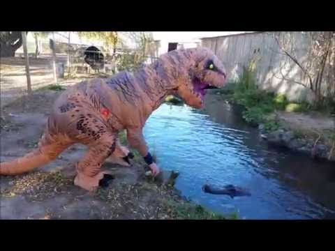 TRex vs Alligator  Feeding the Happy Gilmore Alligator