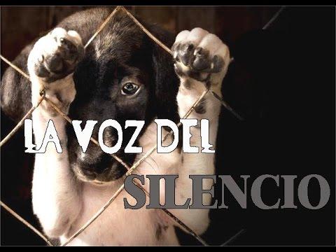La voz del Silencio(EN CONTRA DEL MALTRATO ANIMAL)-Hc Handres 2018