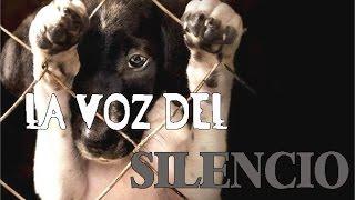 La voz del Silencio(EN CONTRA DEL MALTRATO ANIMAL)-Hc Handres
