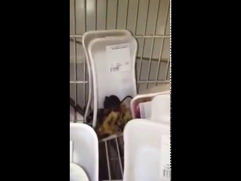 Видео Домашнее частное фото бляди