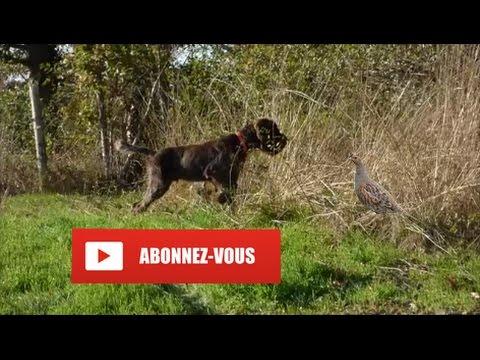 Chasse De La Perdrix Grise | HD