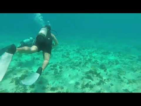 Scuba Diving In The Cayman Islands