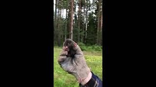 Поймали крота