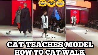 CAT TEACHES HOT MODELS HOW TO CAT WALK. THE REAL CAT WALK