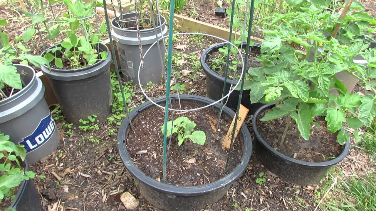 small space container gardening with 5 types of vegetables the rusted garden 2013 youtube