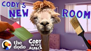 Tiny Alpaca Gets Her Own Bedroom | Cody The Tiny Alpaca (Episode 5)