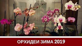 Мои Орхидеи Цветут: Обзор Зима 2019