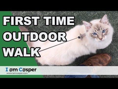 Outdoor walk - Casper getting used to walk on a leash