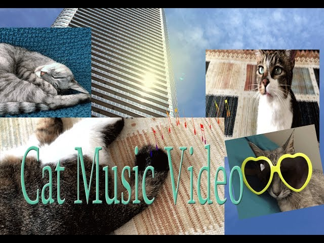 Cat Music Video(Long Version) しっぽでスイング (^^♪♫ 🐈🐈🐈kk object