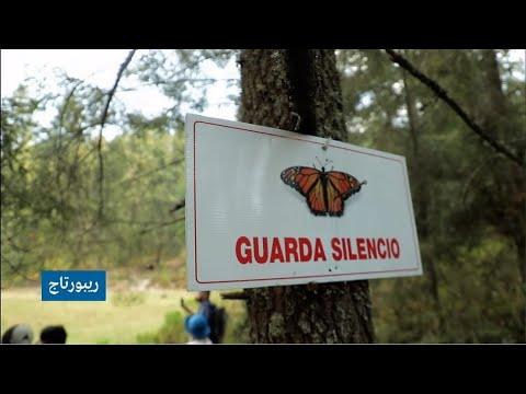 من أمريكا الشمالية إلى المكسيك.. الفراشات الملكية وأشهر هجرة في عالم الطبيعة!  - 19:00-2021 / 5 / 7