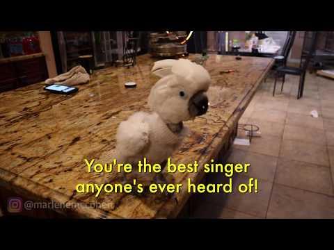 I TAUGHT MY BIRD TO SING!