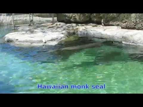 Waikiki Aquarium in Hawaii, April 2014