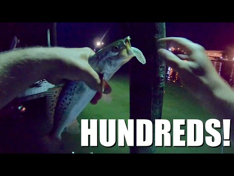 WAYLAYING speckled trout after dark under lights