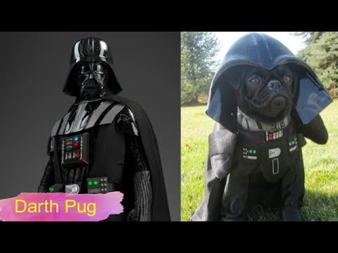 Cute Pets Dressed Up As Star Wars Characters