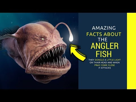 Angler Fish Facts For Kids- Intrusting Facts You Need To Know About Angler Fish