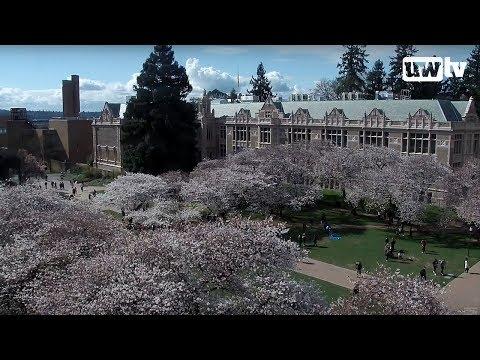 UW Cherry Blossom Cam