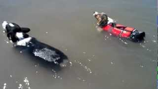 Kiba And Daisy Swimming In The River