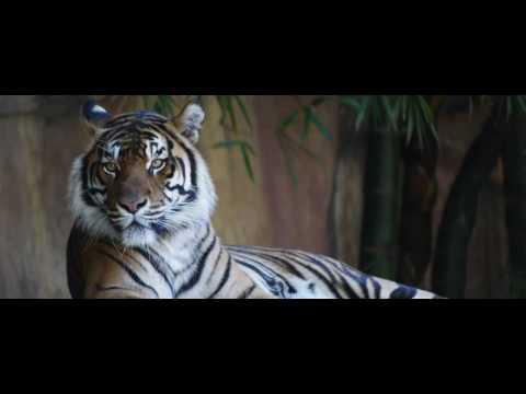 Tiger Capital Group
