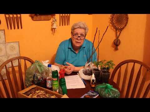 105 От личинок майского жука