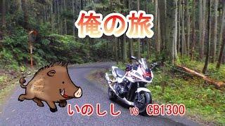 2014年11月2日(俺の旅) 岐阜県の山奥でイノシシに追いかけられました...