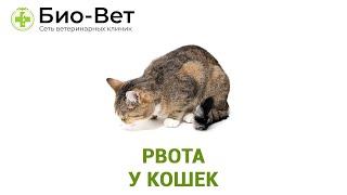 Рвота у кошек. Ветеринарная клиника Био-Вет.