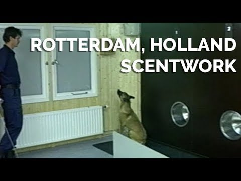 Rotterdam Scentwork - KNPV Commands