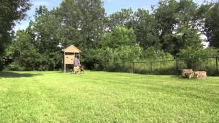 Serpentine Drill | Tyler Muto's Conversational Leash Work™