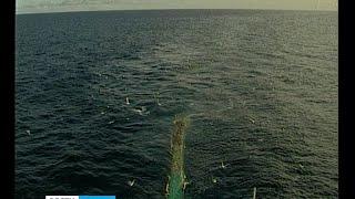 Рыбаки Карелии возмущены запретом на вылов онежского лосося
