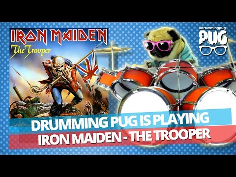 Drumming Pug - Iron Maiden The Trooper