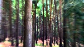 CinderVOMIT feat. Dark Whisper & Luuli - The Spirit of The Forest