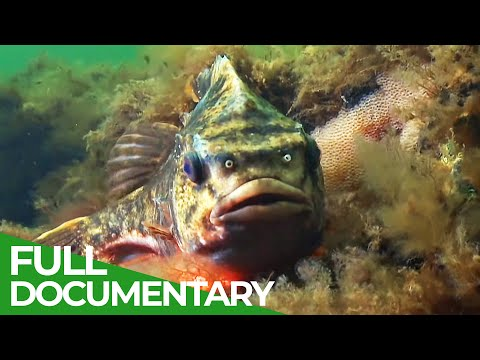Blue Planet: The Fascinating World Beneath the Waves | Free Documentary Nature