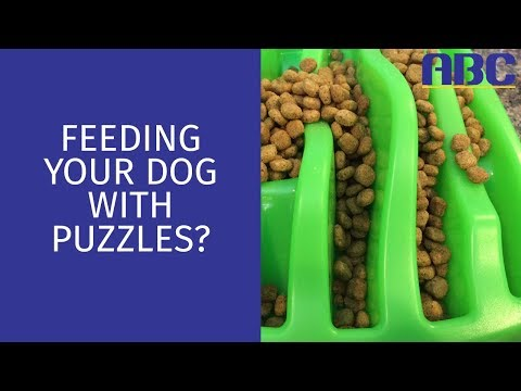 Feeding Your Dog With Food Puzzles | Animal Behavior College