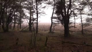 Westerheide Mist 28 feb 2011 versie 1c.mpg