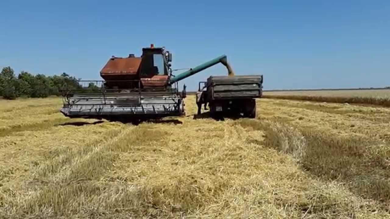фото уборка пшеницы