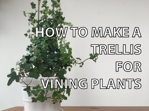 diy-  -how-to-make-a-trellis-for-a-potted-plant-(with-just-two-materials)