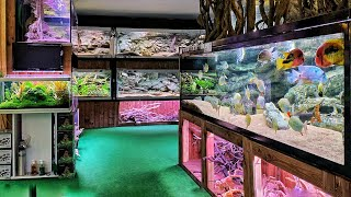 Epic Tour of the Most Interesting Fish Store - Unimati
