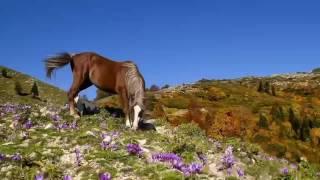 Konie piękne zwierzęta 💖#12