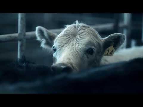 Winters Bone: The Cattle Market