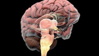 Complex Regional Pain Syndrome (CRPS) Reflex Sympathetic Dystrophy (RSD)