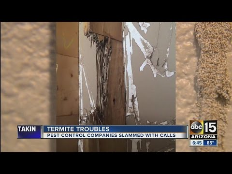 October is a busy month for termites in AZ, but is even busier