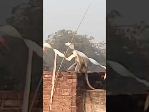 Khatripar bhojpuri WAP.in