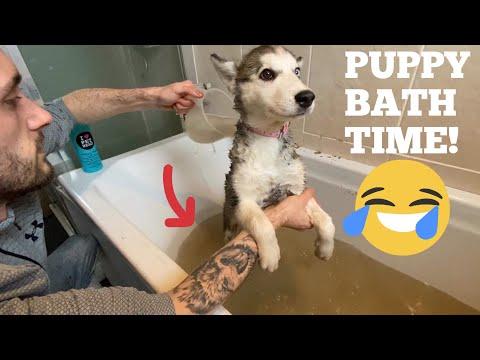 Husky Puppy DIRTY Bath Time!