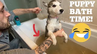 Husky Puppy DIRTY Bath Time!