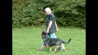 Dog Training - Chris