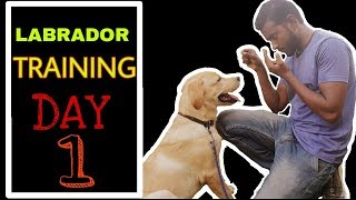 Labrador Training - Day 1 ( Best way to train your dog )