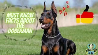 Getting To Know Your Dog's Breed: Doberman Edition