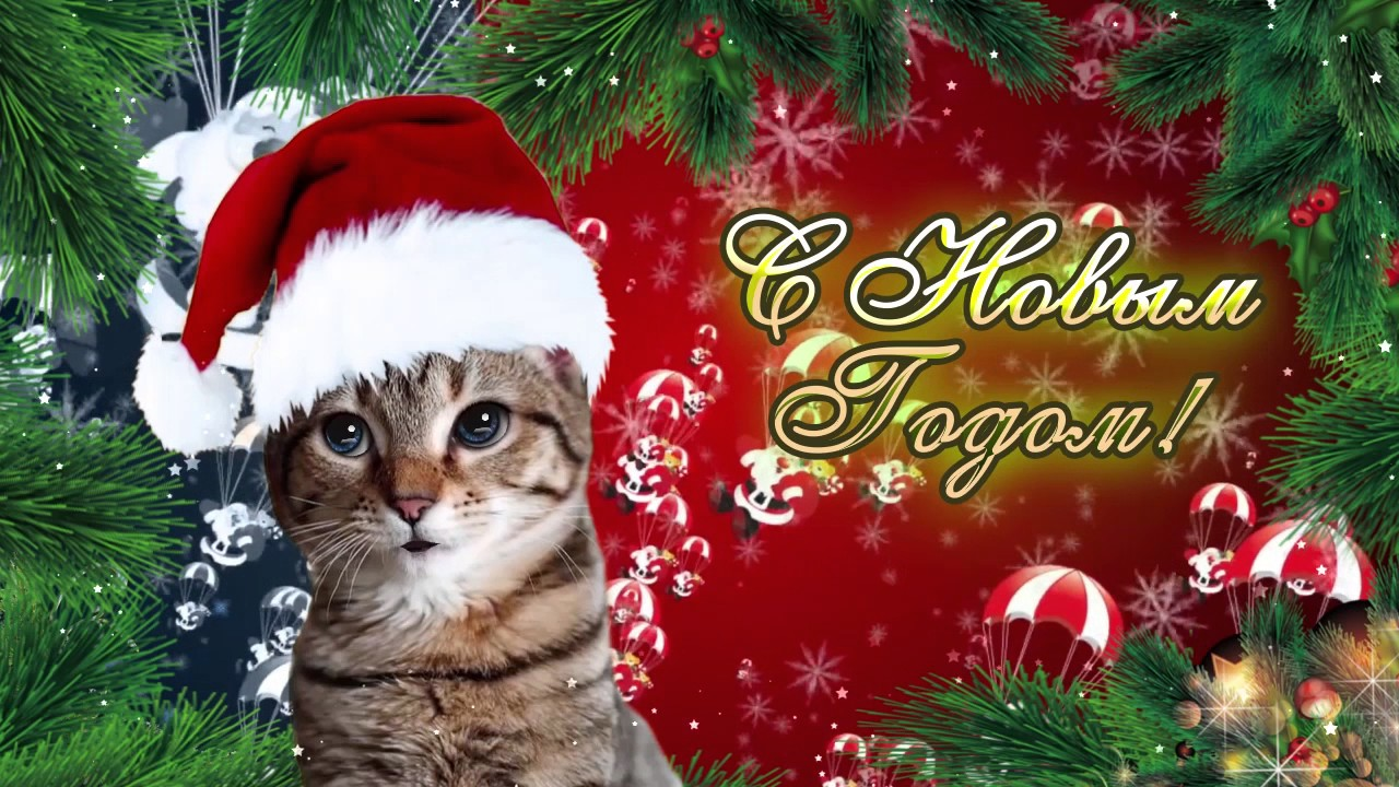 Поздравления от кошки с новым годом