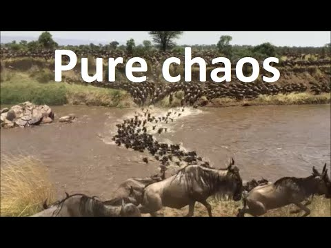 Great wildebeest migration between Masai Mara and the Serengeti