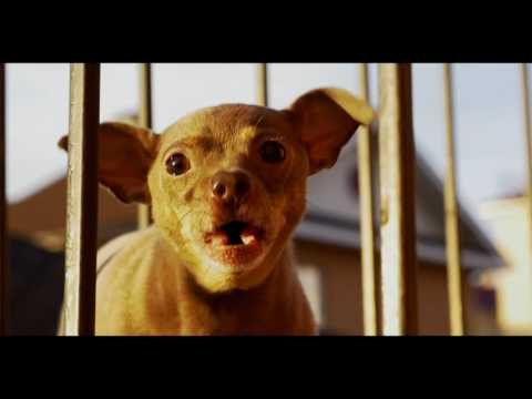Camera Test Cool Dogs Panaconic GH4