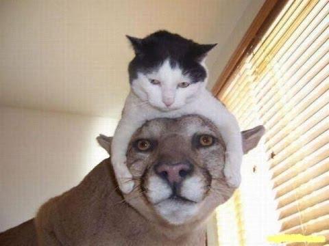 Видео про кошек. Кошки приколы. Забавные кошки. - Ржачные видео приколы